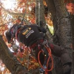 Hanging In The Trees