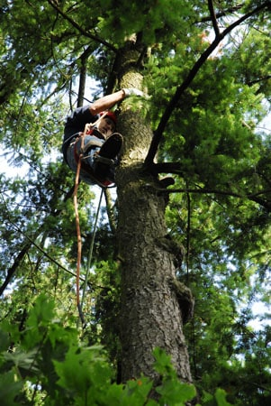 Tree Trimming in Tualatin