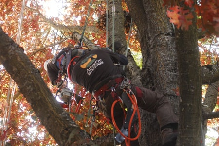 hiring a tree care service in Portland - what to know