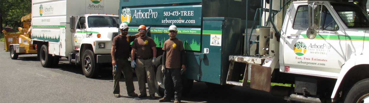 Meet the ArborPro Tree Experts Team