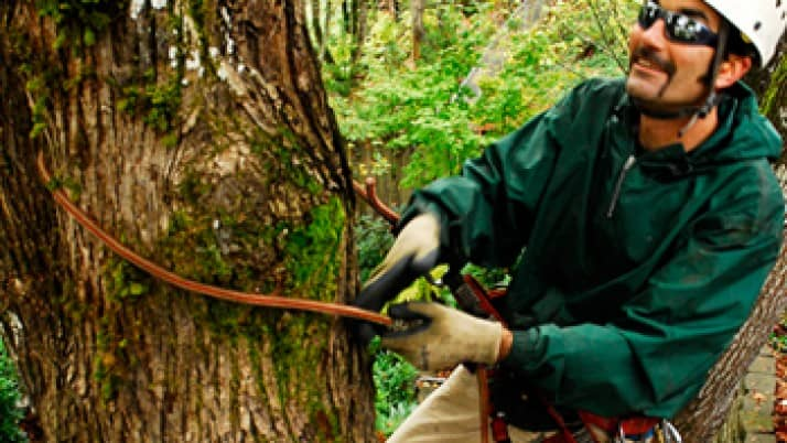What You Should Know About Hiring a Tree Care Service