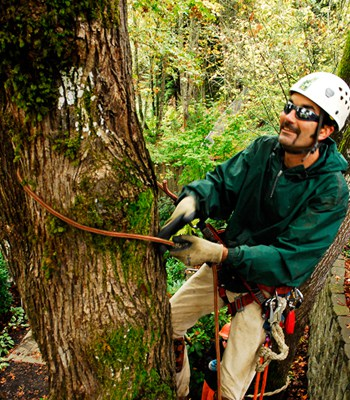 Professional Tree Removal in the Beaverton Area