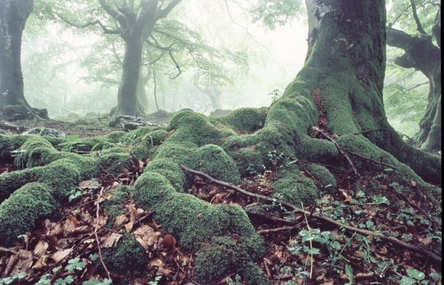 healthy roots that are moss covered