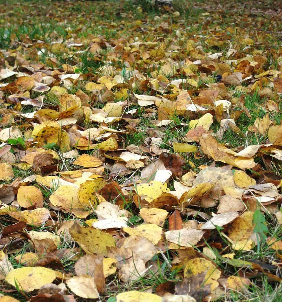 Turning Leaves into Compost